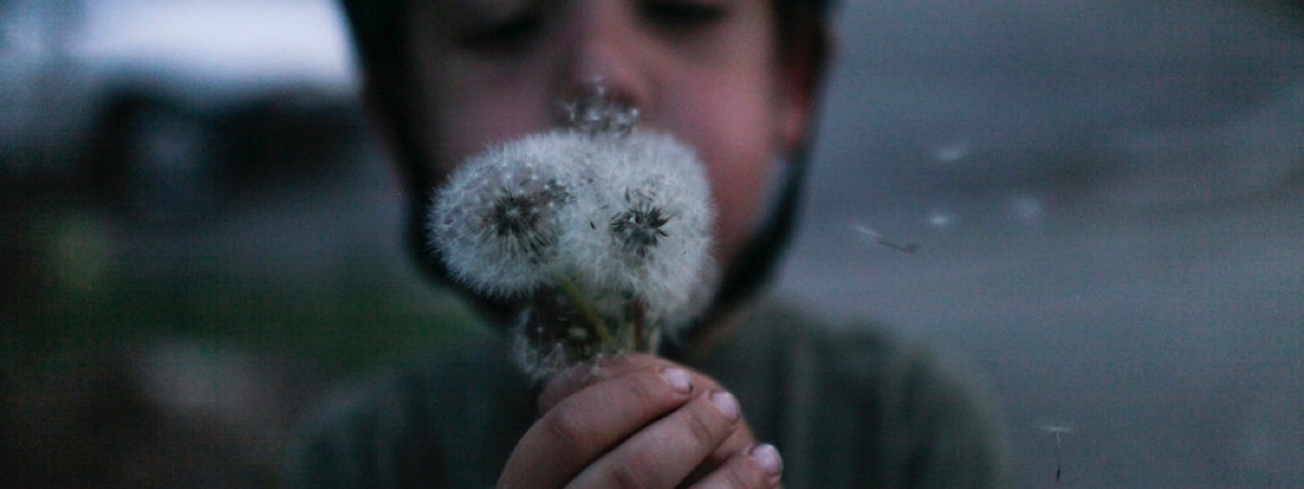 child blowing dandelion seeds